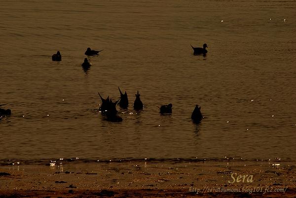 黄昏の海で