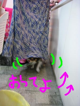 IMG_1226.jpg