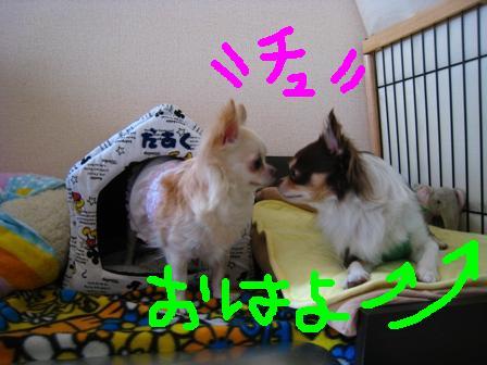 IMG_1670_20090925225950.jpg