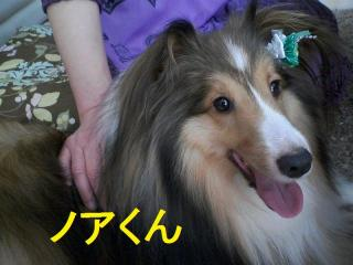 20110724_152318_0000.jpg