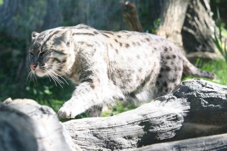 fishing cat cliff1066#8482;