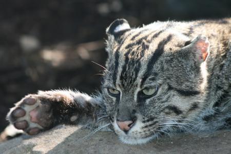 fishig cat