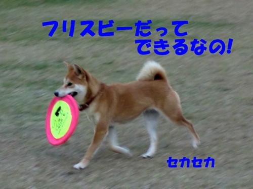 CIMG0275.jpg