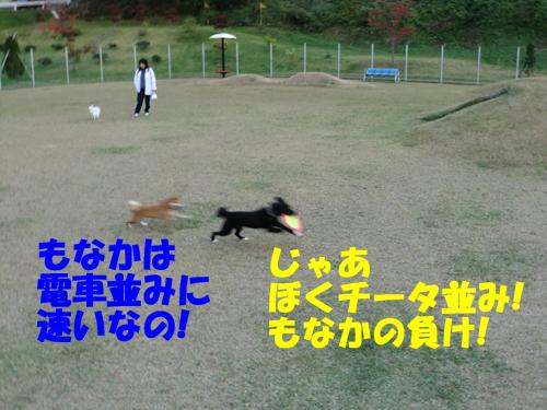 CIMG0290.jpg