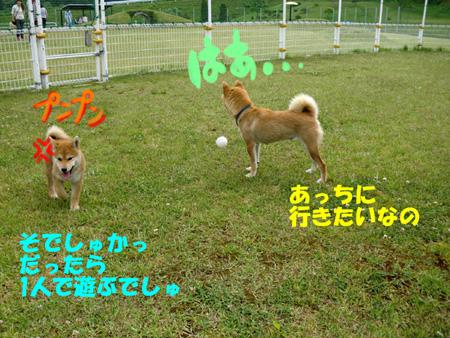 CIMG0959.jpg