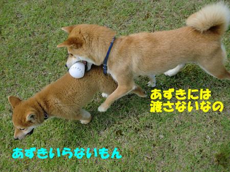 CIMG0978.jpg