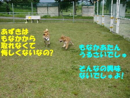 CIMG0979.jpg