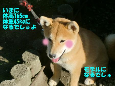 CIMG1056.jpg