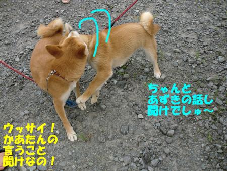 CIMG1067.jpg