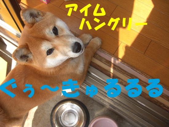 CIMG1606.jpg