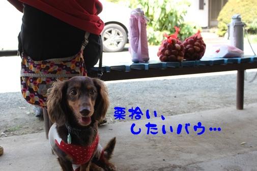 2011091002.jpg