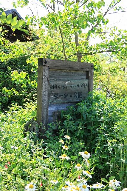 IMG_0843花フェスタ記念公園