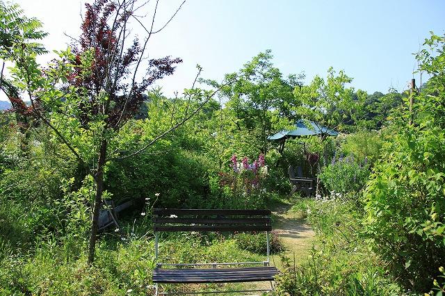 IMG_0854花フェスタ記念公園