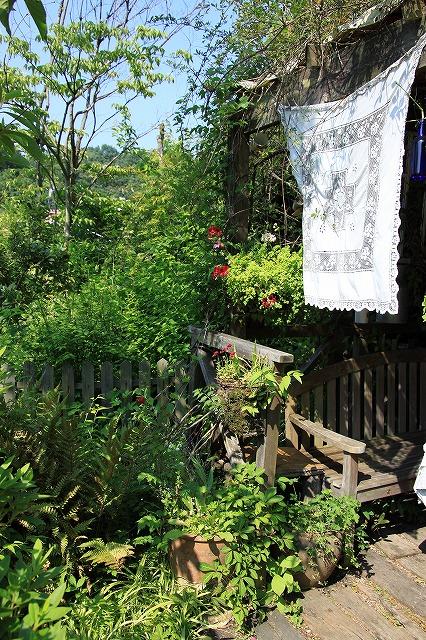 IMG_0865花フェスタ記念公園