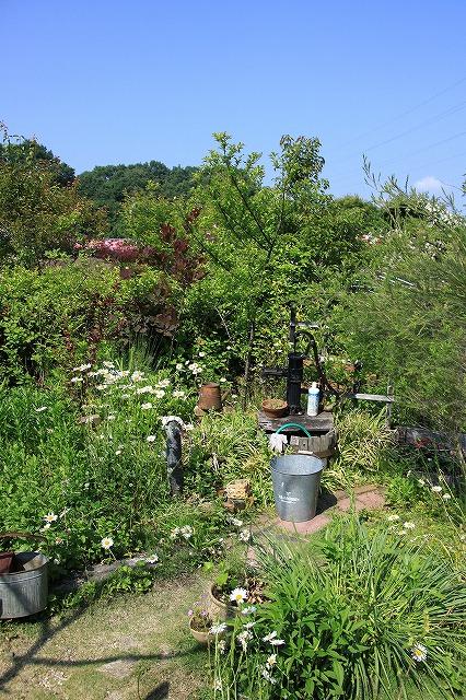 IMG_0867花フェスタ記念公園