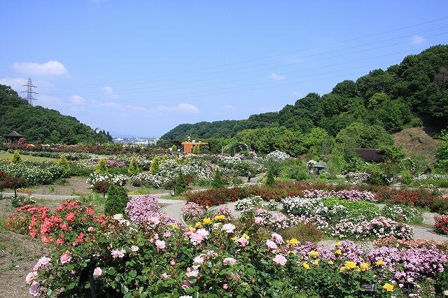 IMG_0992花フェスタ記念公園