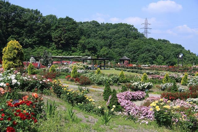 IMG_1000花フェスタ記念公園