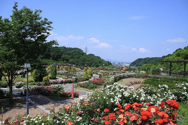 IMG_1157花フェスタ記念公園