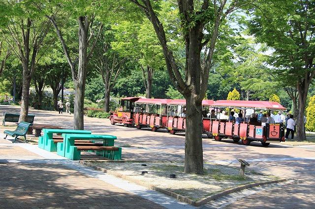 IMG_1163花フェスタ記念公園