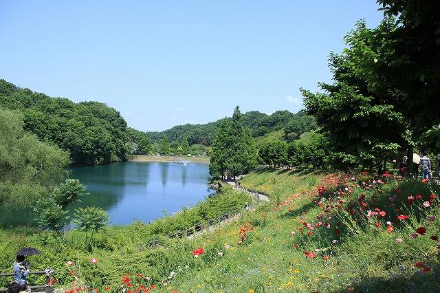 IMG_1181花フェスタ記念公園