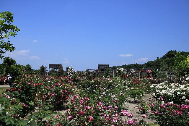 IMG_1204花フェスタ記念公園