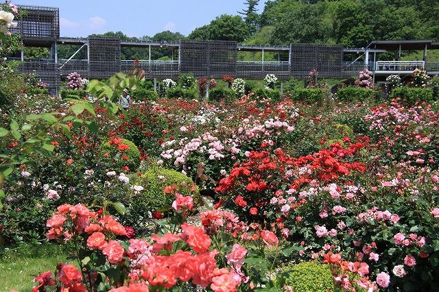IMG_1273花フェスタ記念公園