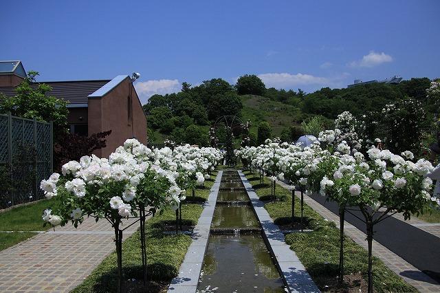 IMG_1357花フェスタ記念公園