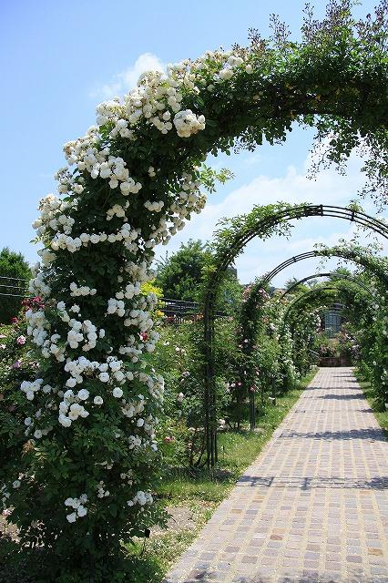 IMG_1364花フェスタ記念公園