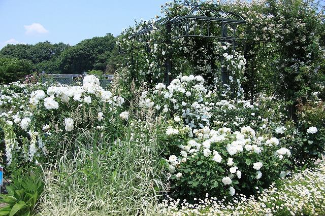 IMG_1377花フェスタ記念公園