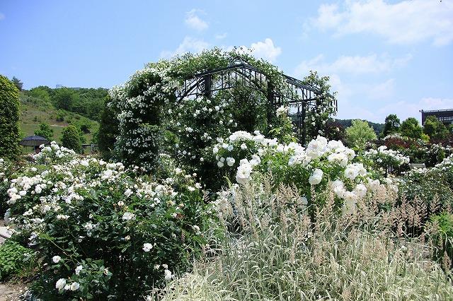 IMG_1409花フェスタ記念公園