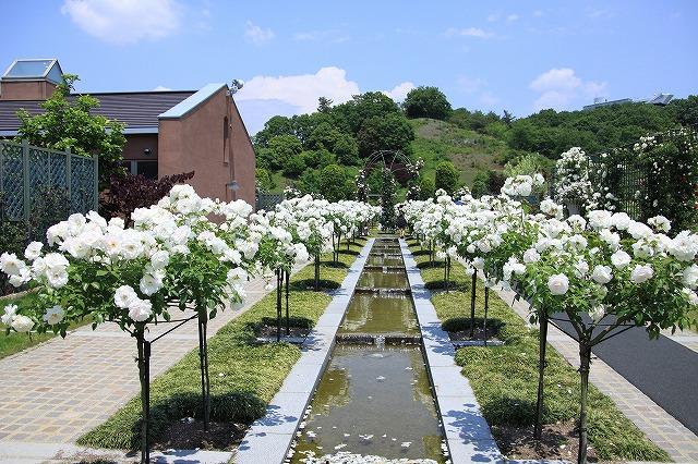 IMG_1503花フェスタ記念公園