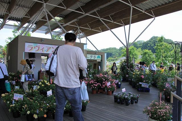 IMG_1541花フェスタ記念公園