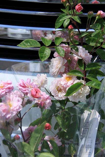 IMG_1559花フェスタ記念公園