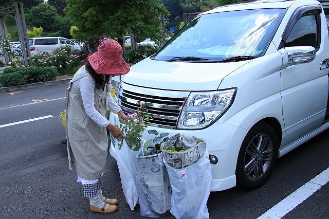 IMG_1565花フェスタ記念公園