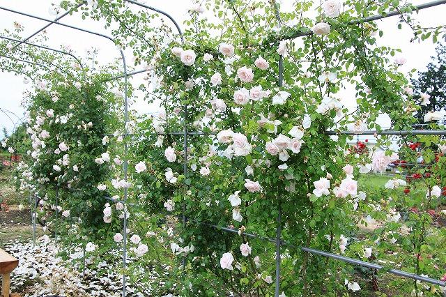 IMG_3875安曇野バラのお宅訪問