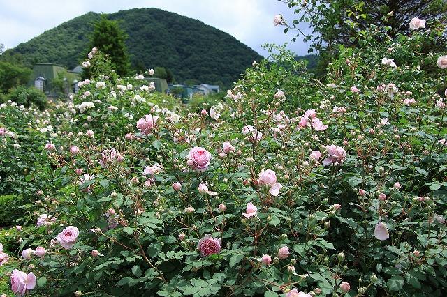 IMG_4239軽井沢レイクガーデン