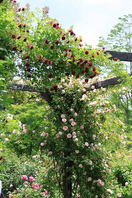 IMG_4310軽井沢レイクガーデン