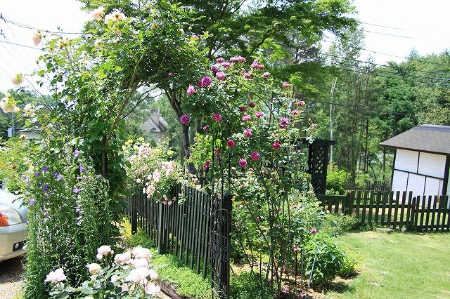 IMG_5010バラのお庭のペンションさん