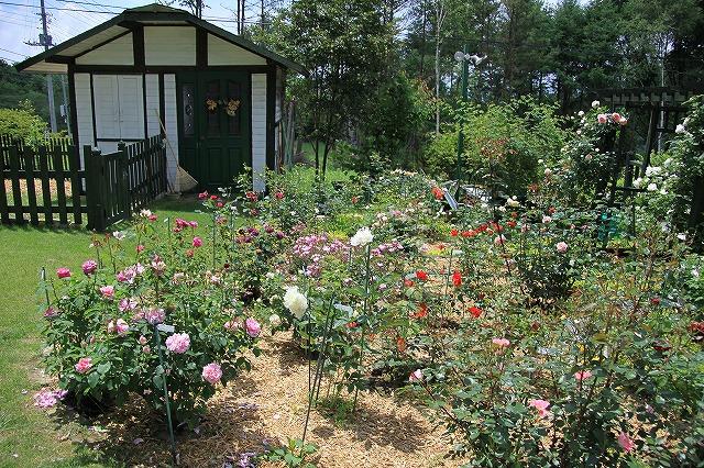 IMG_5030バラのお庭のペンションさん