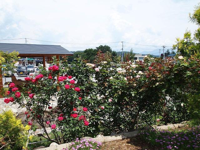 142白州花壇
