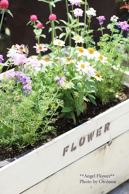 IMG_5224季節のお花を・・^^