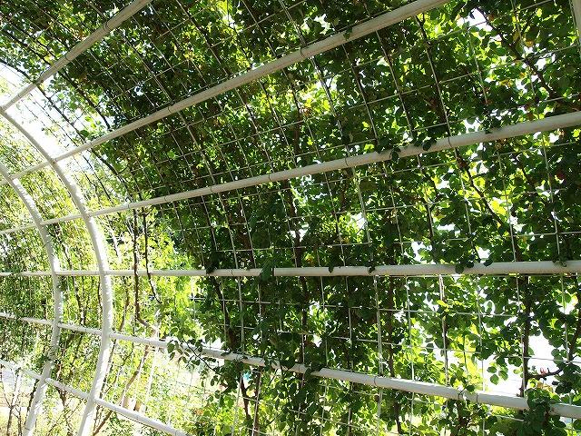 069ハーブ庭園