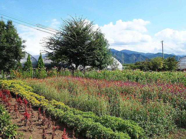 077ハーブ庭園