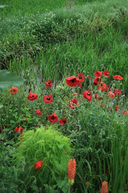 IMG_3382実家の庭