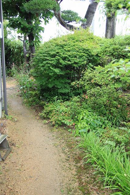 IMG_3434実家の庭