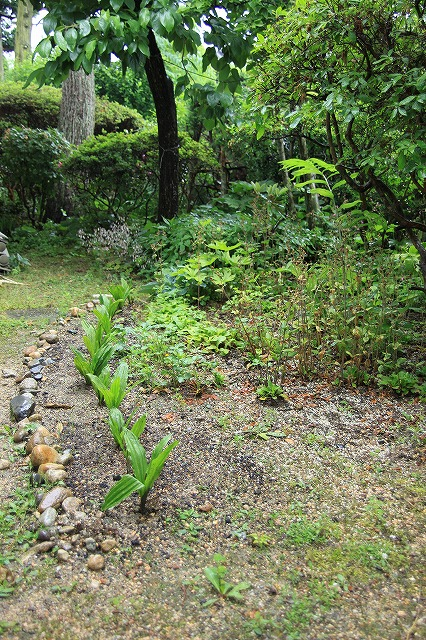IMG_3438実家の庭