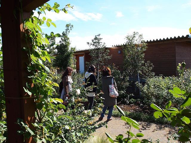 001花菜ガーデン