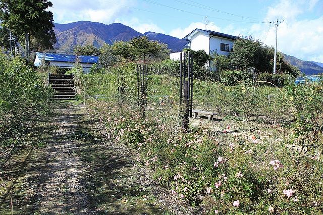 IMG_8633安曇野バラのお庭