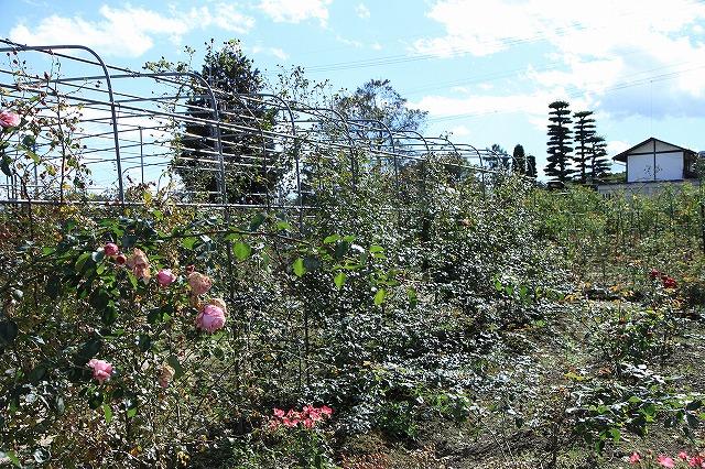IMG_8649安曇野バラのお庭