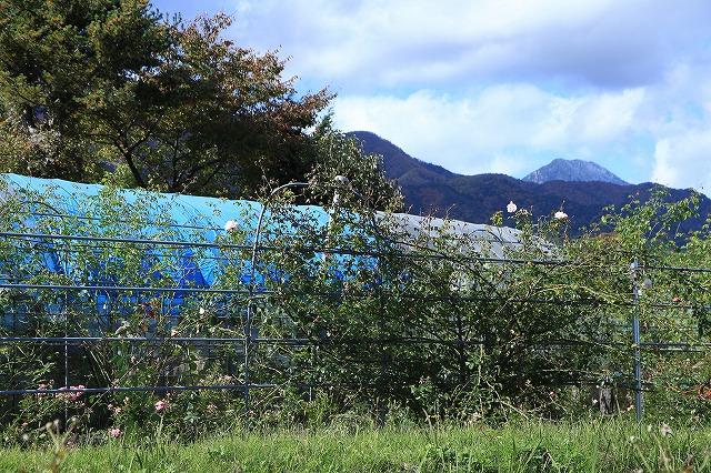 IMG_8670安曇野バラのお庭
